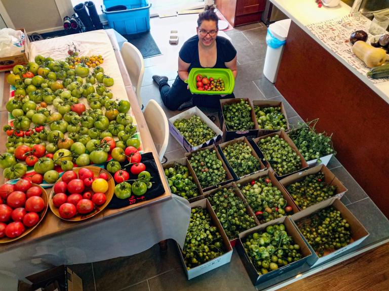 Kimberley_s_tomatoes